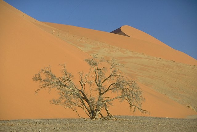 Sossusvlei, Dune 45