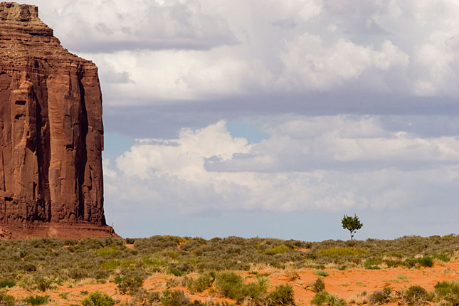 Monument Valley, Lost tree