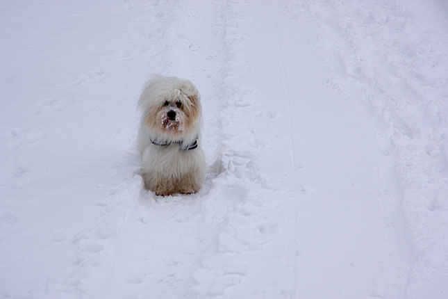 Hohensyburg, Snowdog