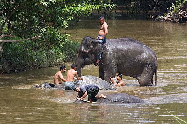 Kuala Gandah, Washing elephants