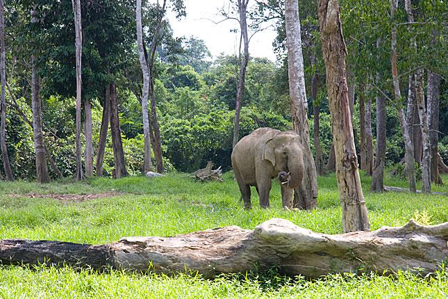 Kuala Gandah, Elephant Sanctuary