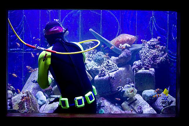 Dubai, Aquarium