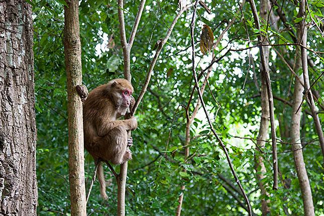 Erawan, Monkey