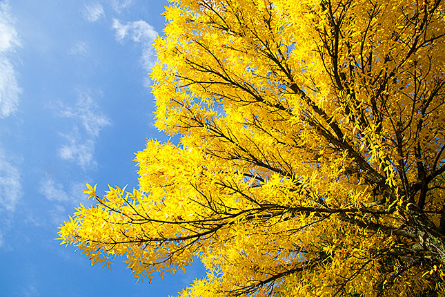 Soest, Autumn