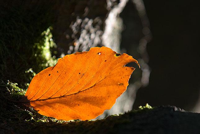 Soest, Autumn 3