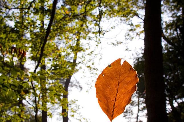 Soest, Autumn 4