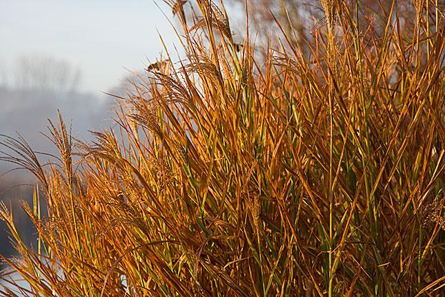 Soest, Autumn 2