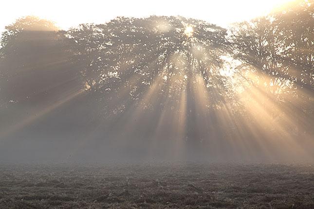 Soest, Morning Light 1