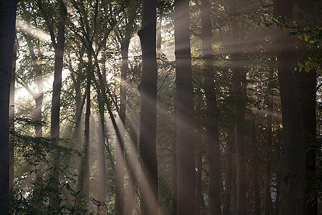 Soest, Morning Light 2