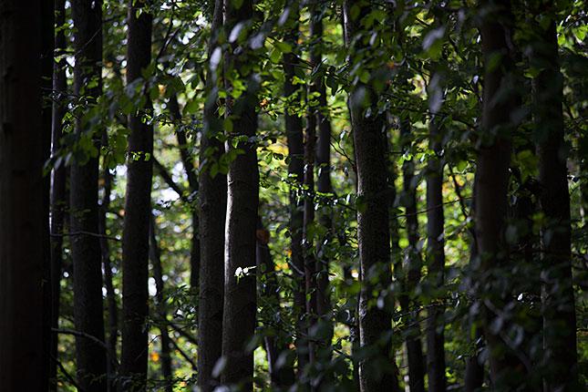 Baarn, Groeneveld Trees