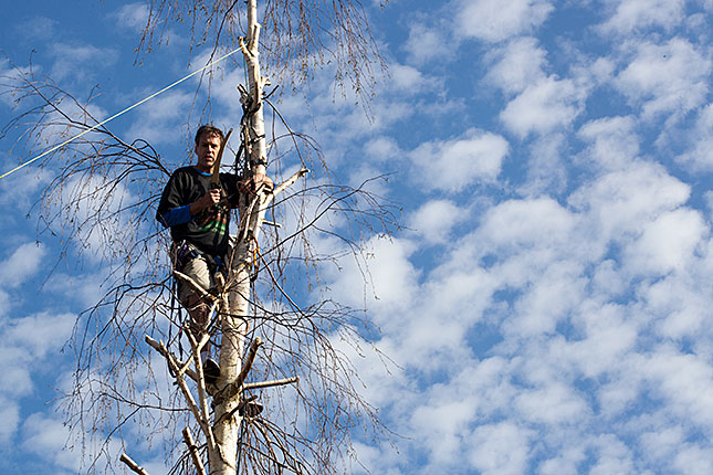 Soest, Pruning a Birch 2