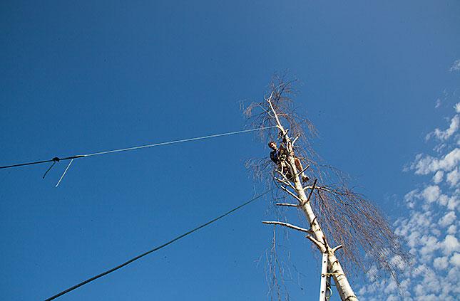 Soest, Pruning a Birch 1