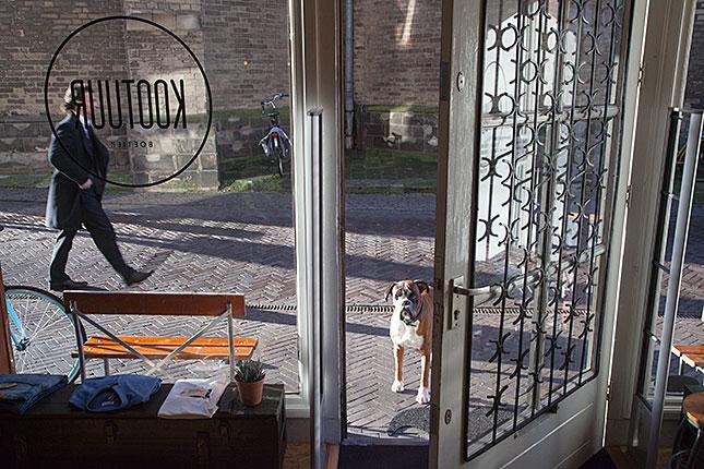 Zwolle, Dog