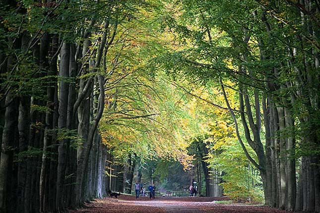 Lage Vuursche, Autumn