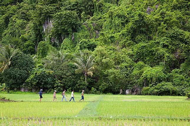 Kampot, Rice Field