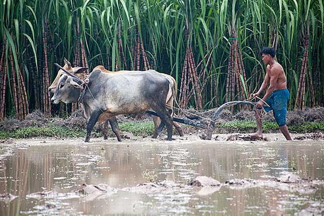 Kampot, Ploughing