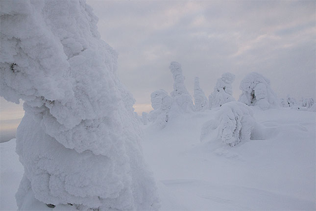 Ruuhitunturi, Snow Trees 2