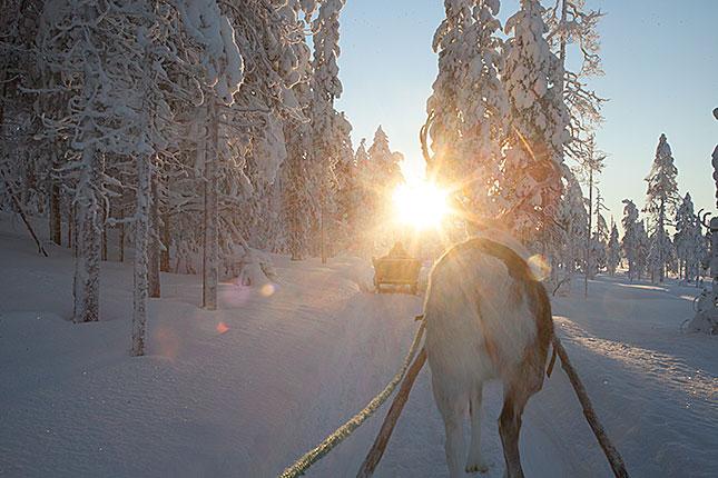 Salla, Reindeer 2