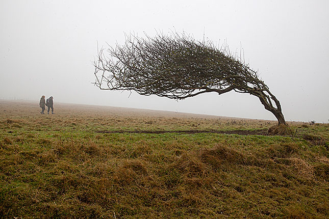 South Downs National Park, Tree